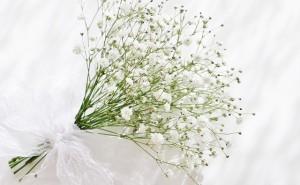 flower-white-640x395